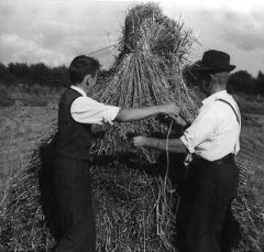 Norbert and Tom Briody stack the sheaves