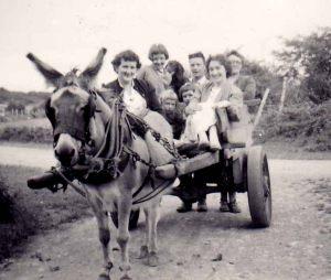 Egenton's donkey and cart